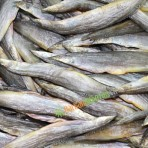 Khô cá chạch đồng