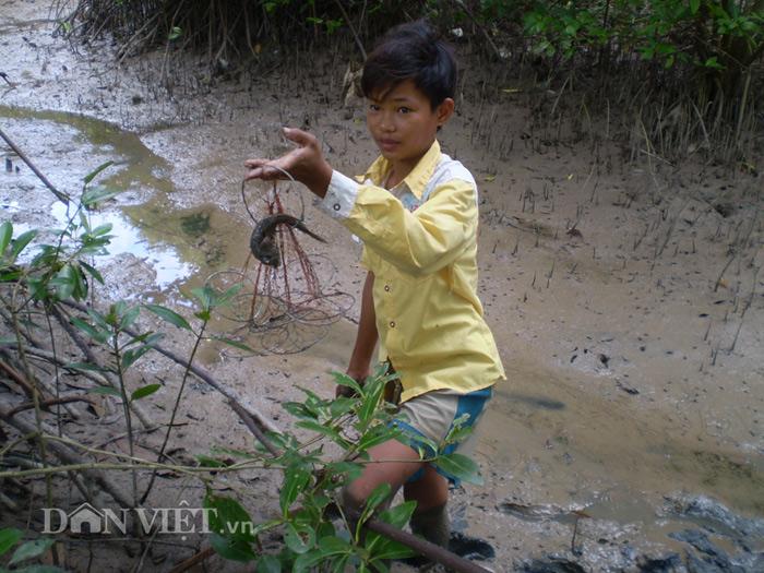 Bắt cá thòi lòi bằng cách đặt xà vi, lưới.