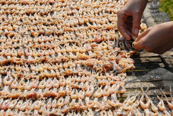 Nhái khô được phơi trên giàn tre đan phủ lưới bên trên.